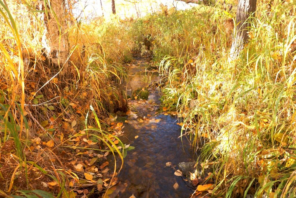 мазута золото в ручье фото время