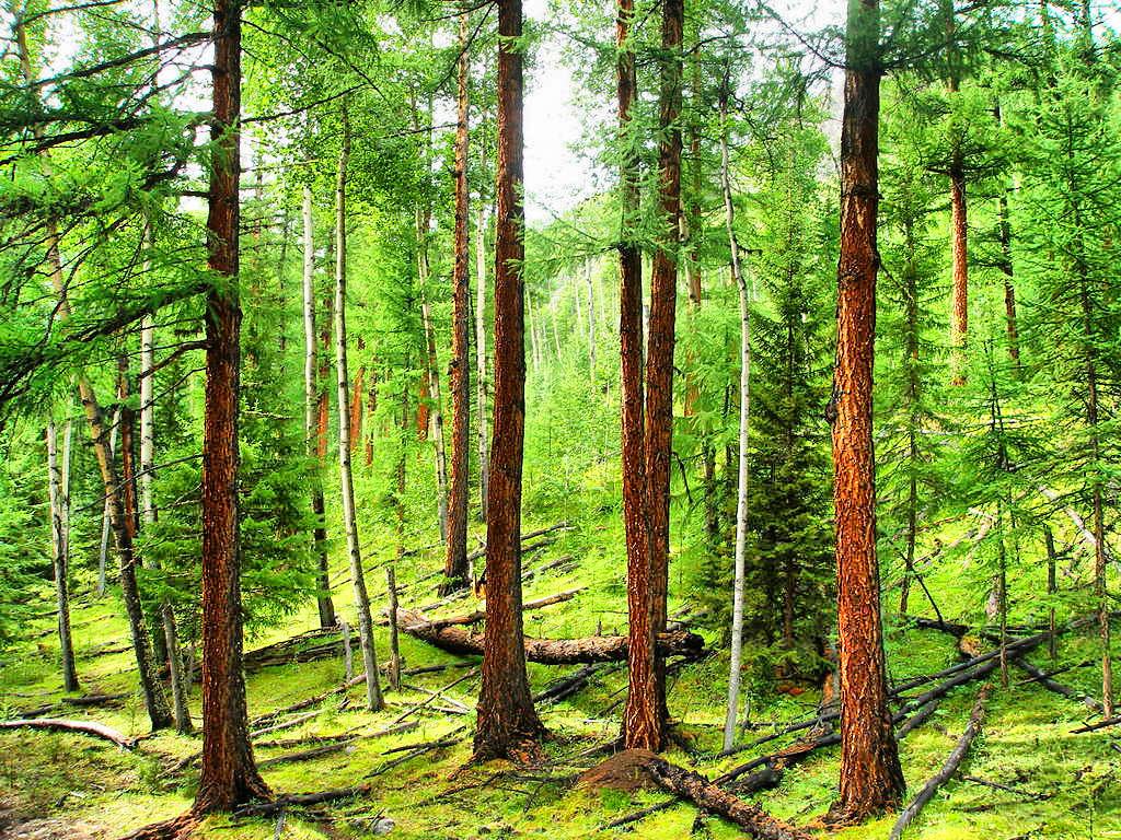 колодец доставкой фото лиственничный лес среди всех
