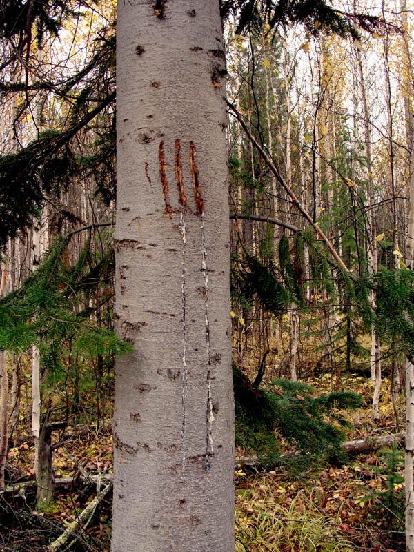 Вешалка из дерева своими руками фото моде