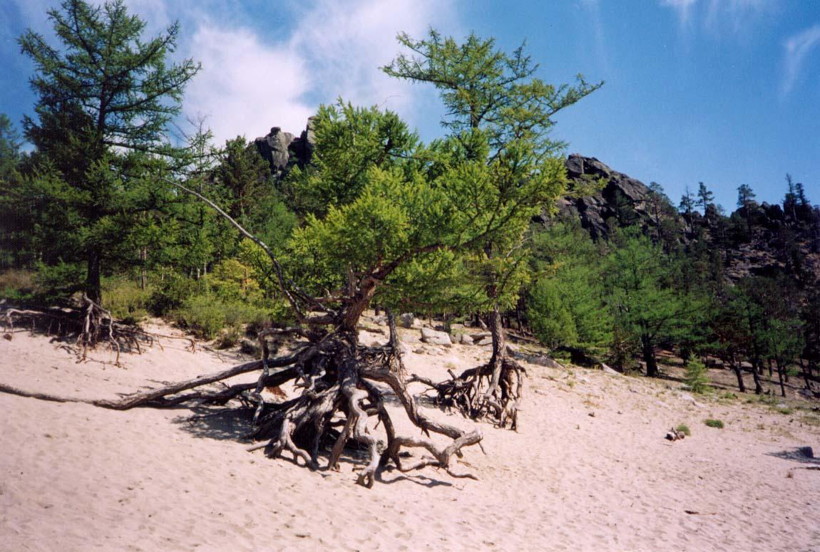 керамика дерево на байкале картинки дизайнерские