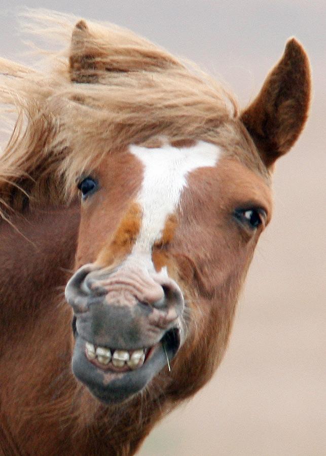 Картинка конь смеется