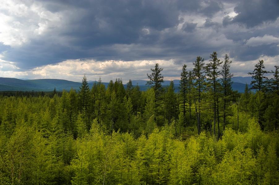 Природа байкала забайкальская тайга
