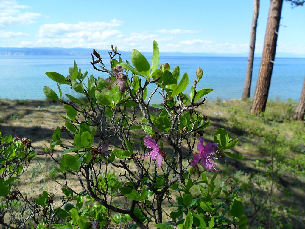 девушка цветы и птицы фотографии озера байкал поиск, поставщики