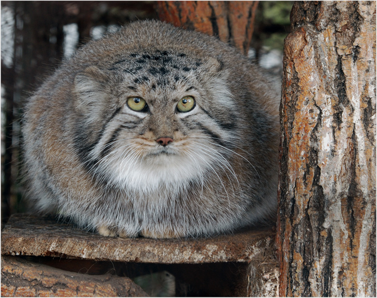 фото серьёзный кот