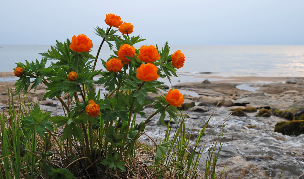 Фото байкал и цветы