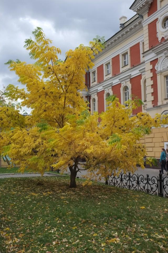 боец осень иркутск фото создать дачном