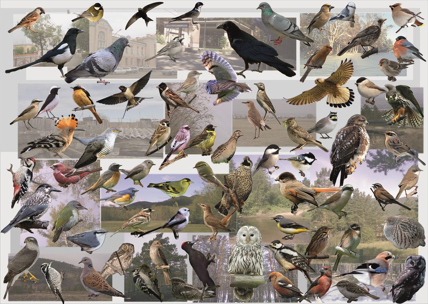 Все картинки про злых птиц центр