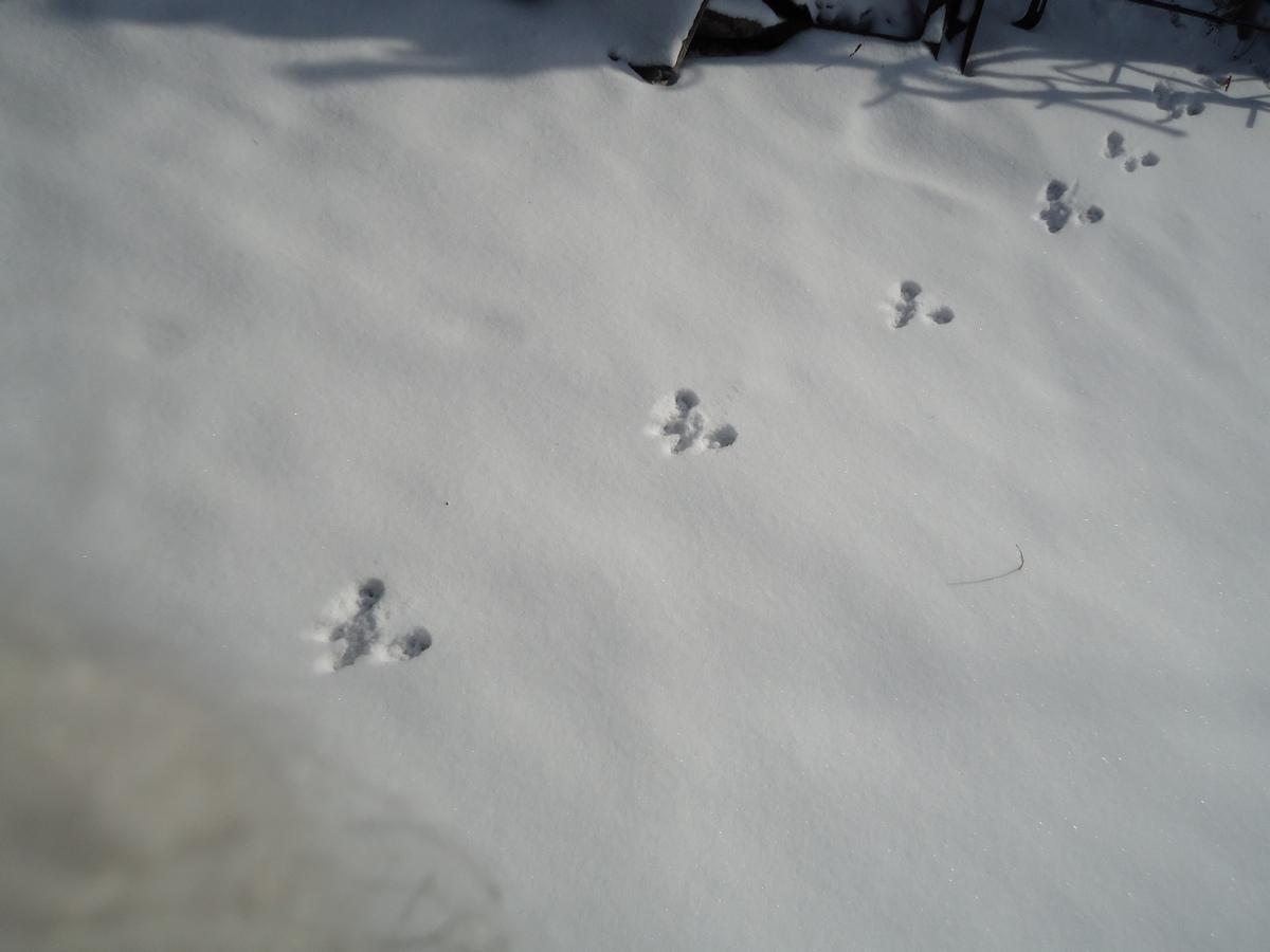 следы белки на снегу фото артистка